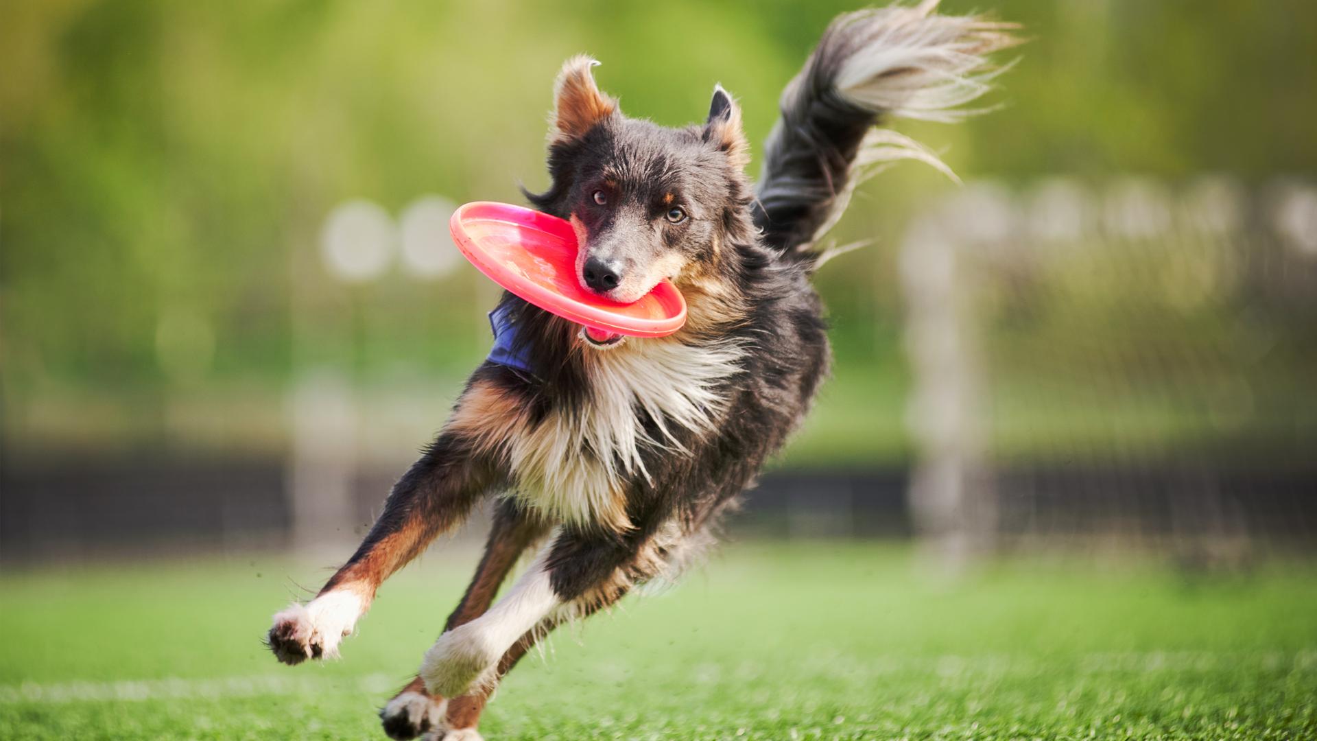 Giornata Disc Dog & Dog Dance