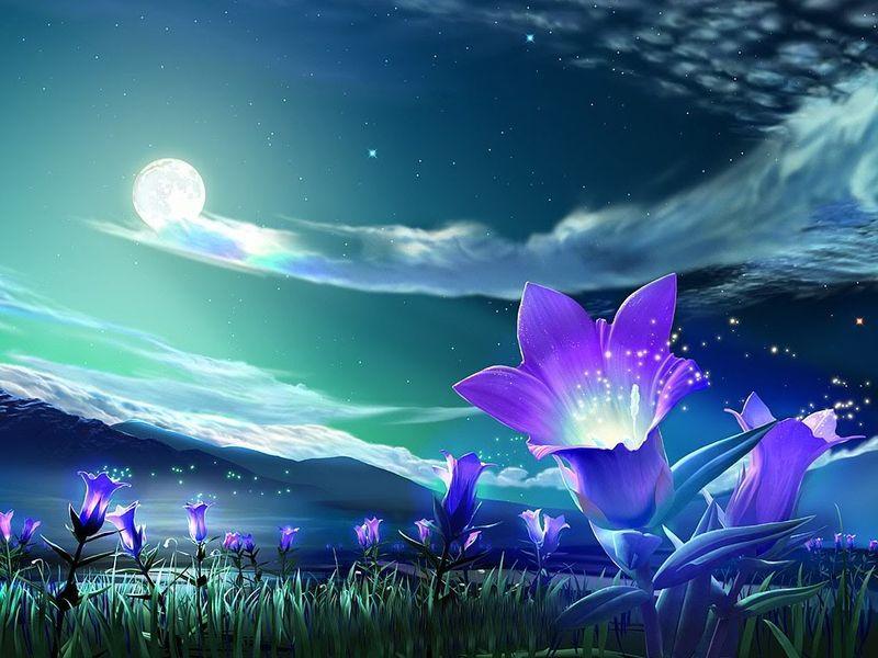 Garden sotto le stelle