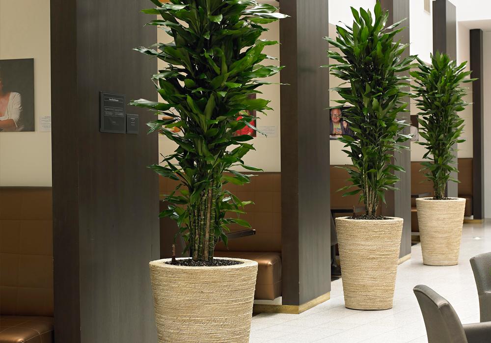 Piante in idrocoltura idee per il design della casa for Creatore della pianta della casa