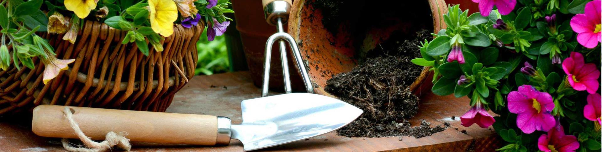 Bagnare Piante Con Bottiglie garden, articoli per animali e la casa a cantù e como | come