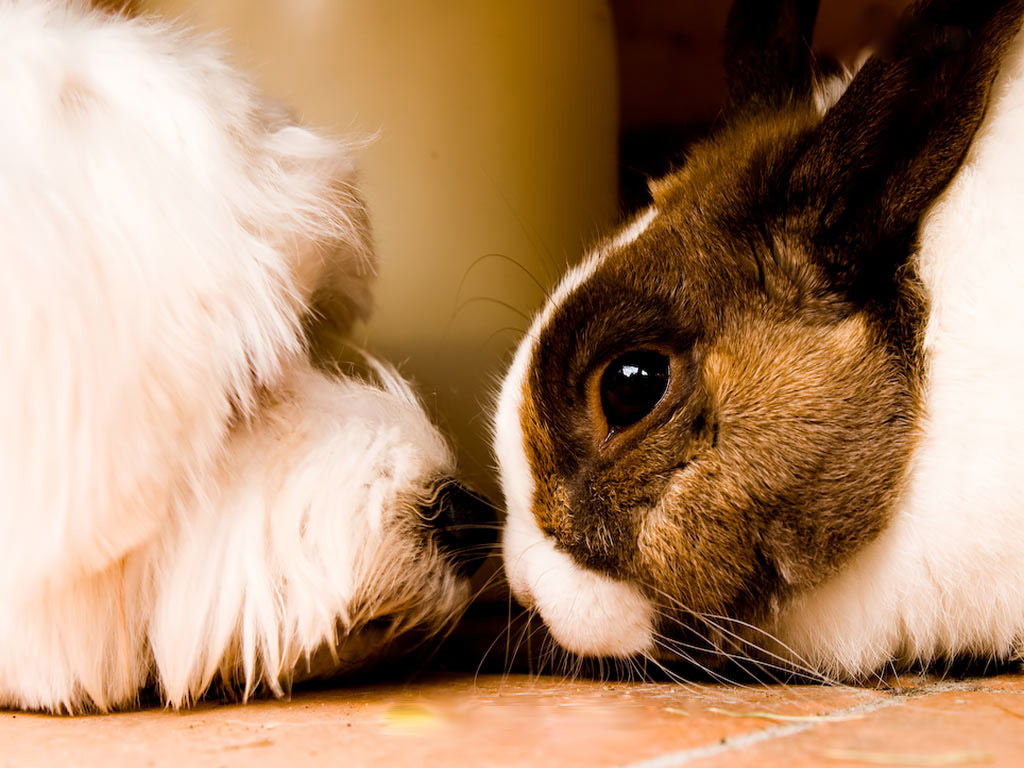cane e coniglio