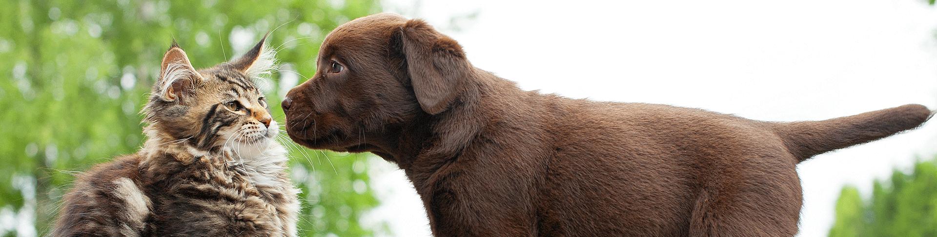 Cibo biologico per cani e gatti giardango for Miglior cibo per gatti