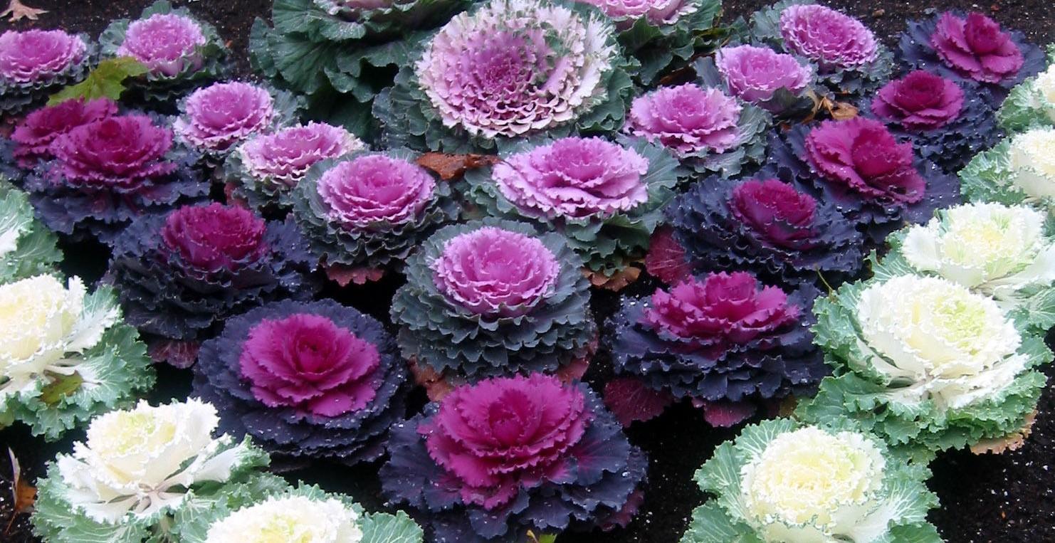 Anche in autunno sbocciano i fiori giardango - Fiori da giardino autunnali ...