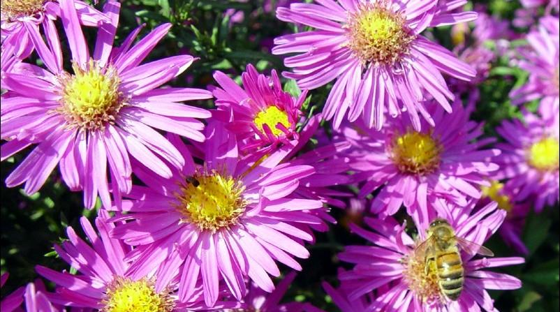 Anche in autunno sbocciano i fiori giardango for Fiori che sbocciano