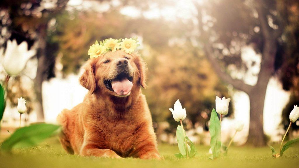 cibo biologico naturale cane