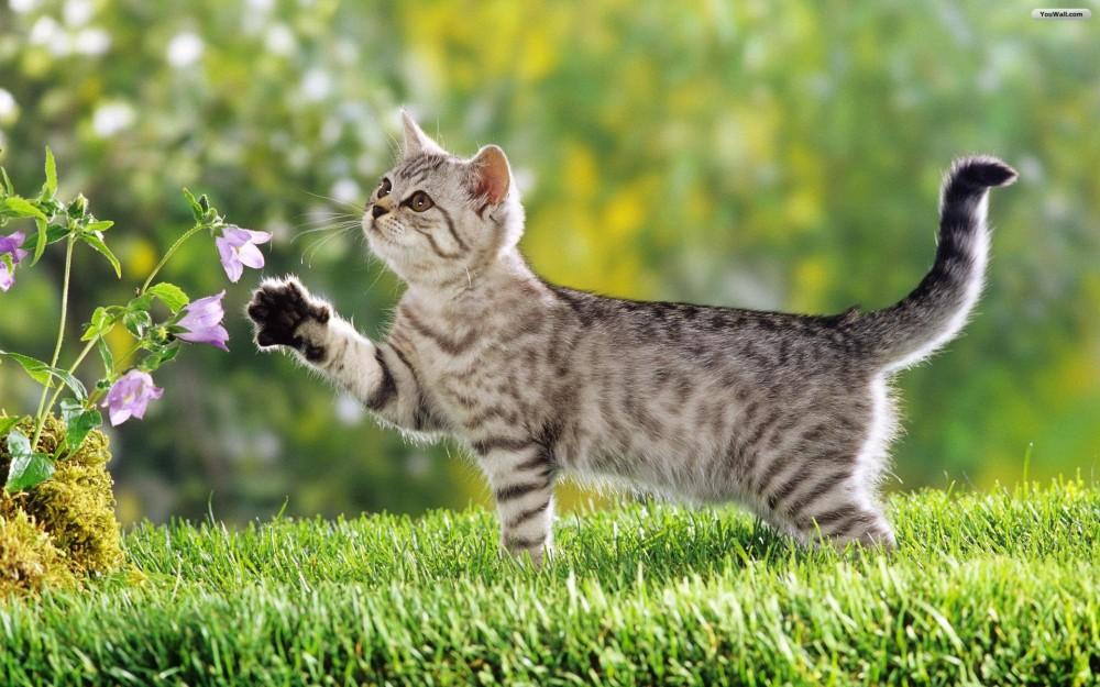cibo biologico naturale gatti