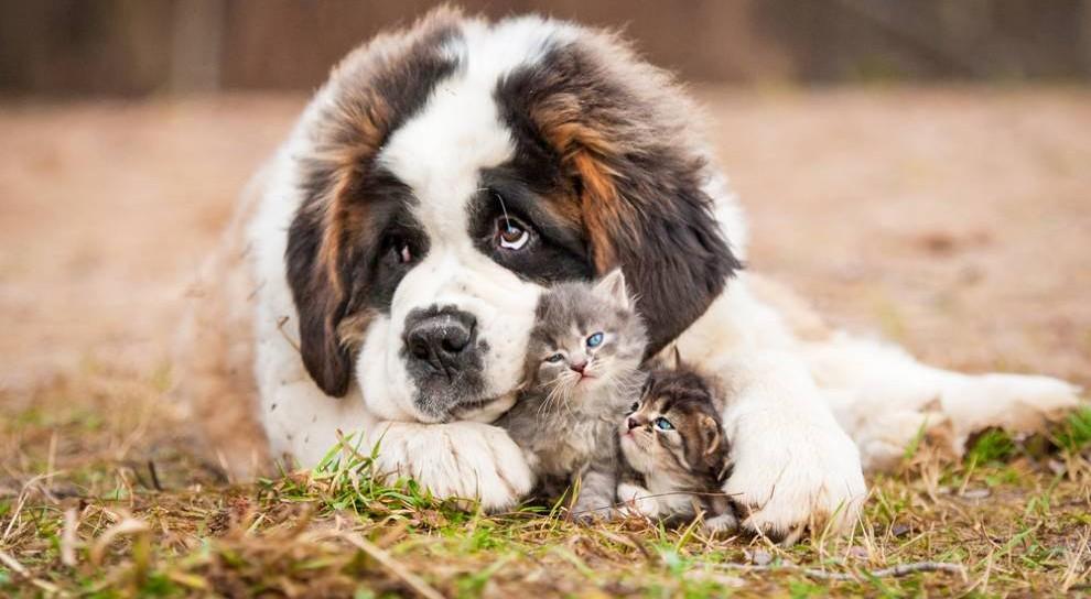 cibo biologico cane e gatti