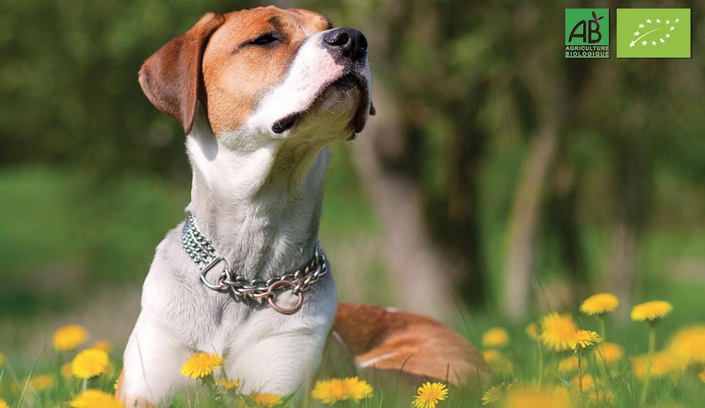 cibo-biologico-per-cani-e-gatti-bio