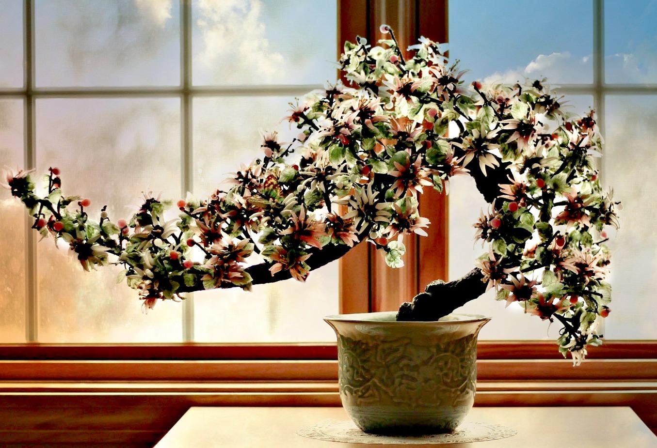 Bonsai: cura e mantenimento
