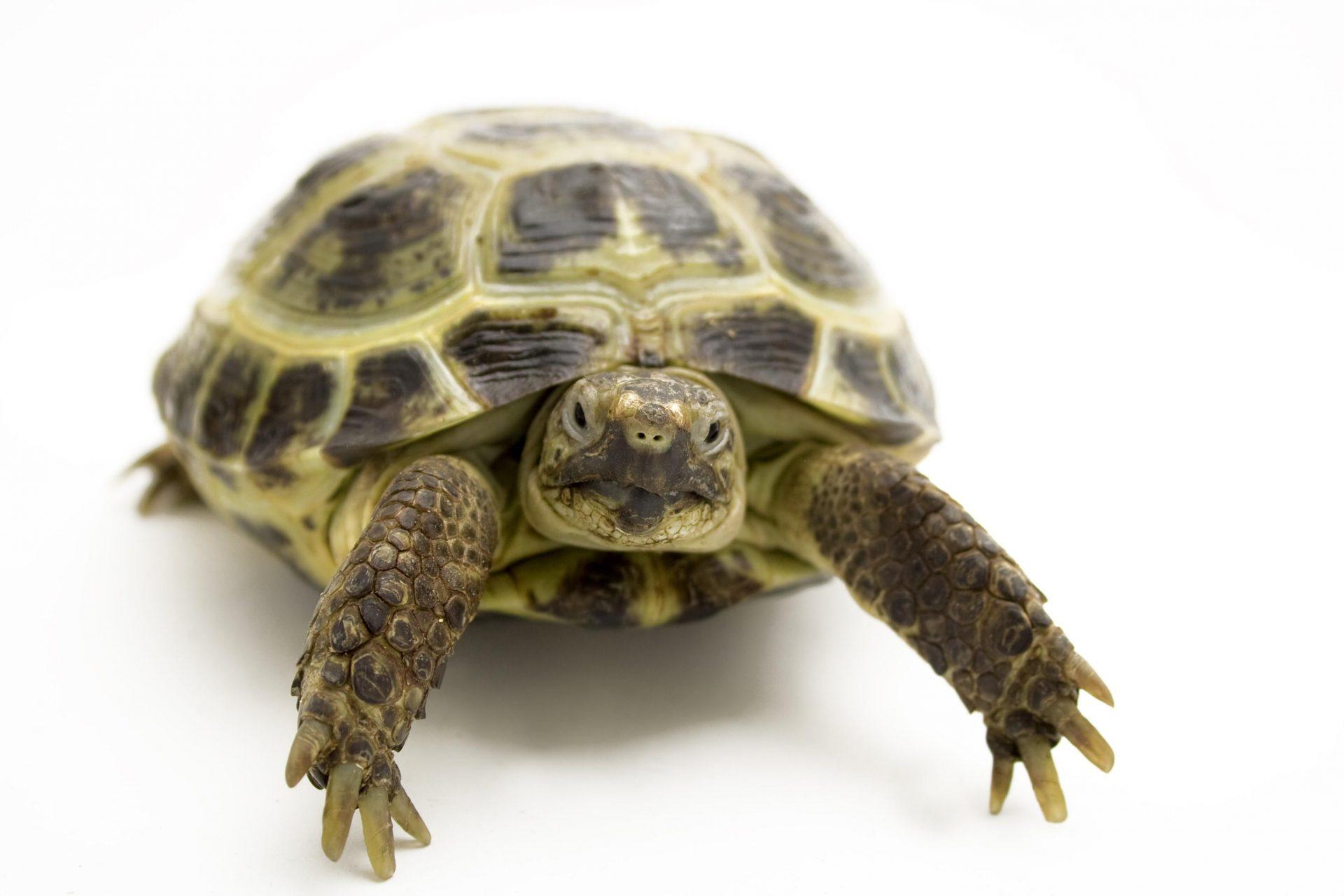 Giornata informativa su rettili e tartarughe garden for Contenitore per tartarughe
