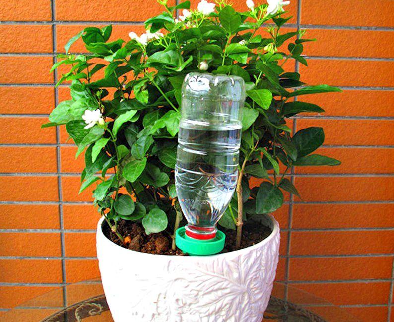 Irrigazione con bottiglia