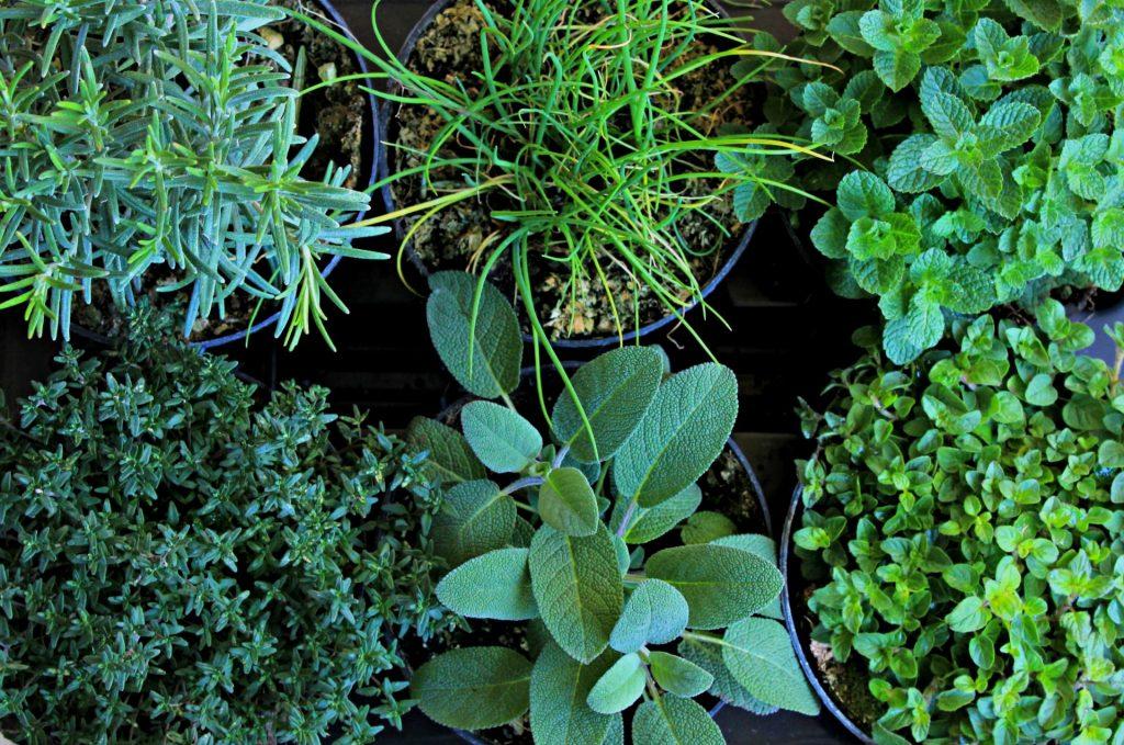 Come coltivare le erbe aromatiche giardango for Erbe aromatiche in vaso