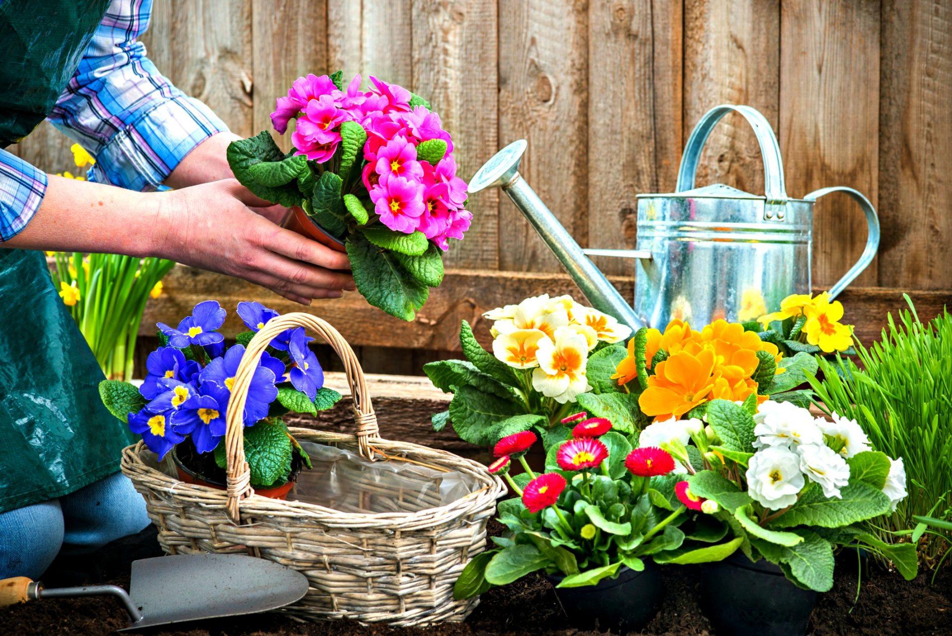 fiori e piante di settembre i lavori da fare in questo