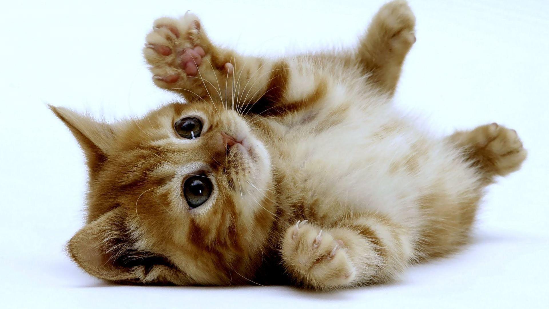 Arriva un gattino
