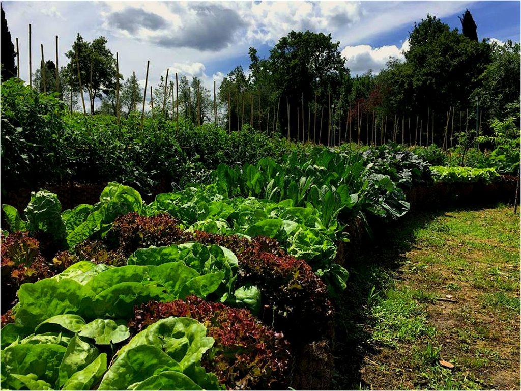 Orti bioattivi, per cibo oltre il biologico