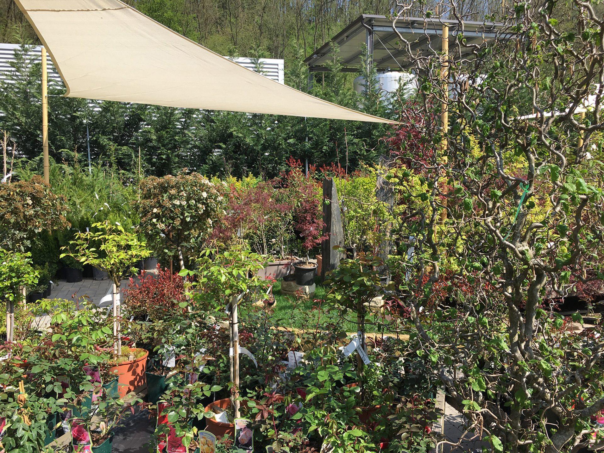 villaggio-delle-piante