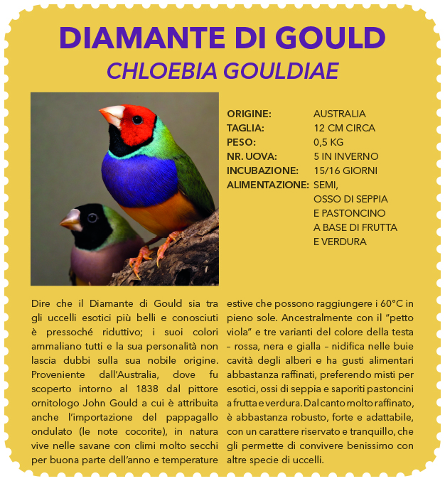 voliera percorribile diamante gould