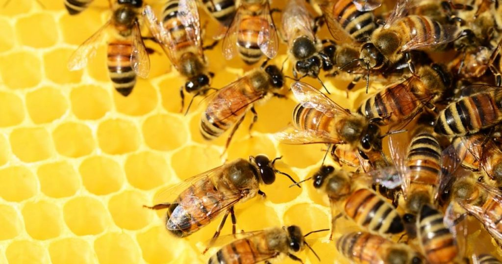 api-apicoltore-giardango