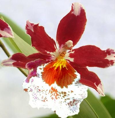 Come curare le orchidee tutti i segreti giardango - Orchidee da esterno ...