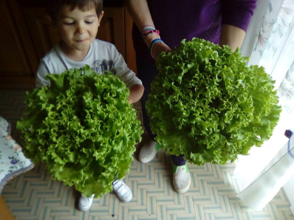lattuga-orti-bioattivi-da-giardango