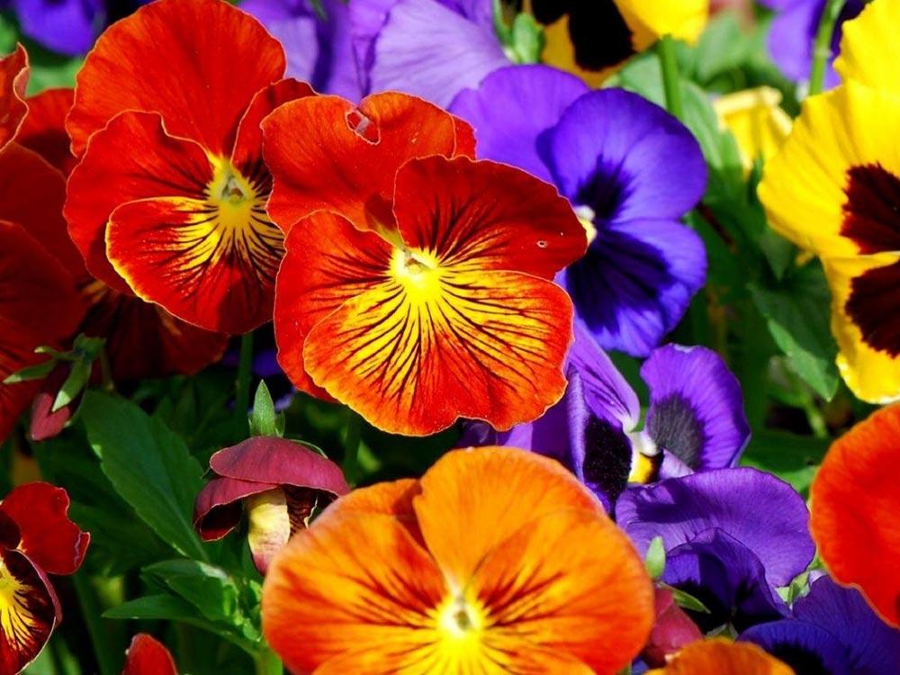 fiori all'ingrosso