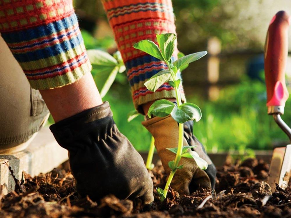 giardinaggio per tutti