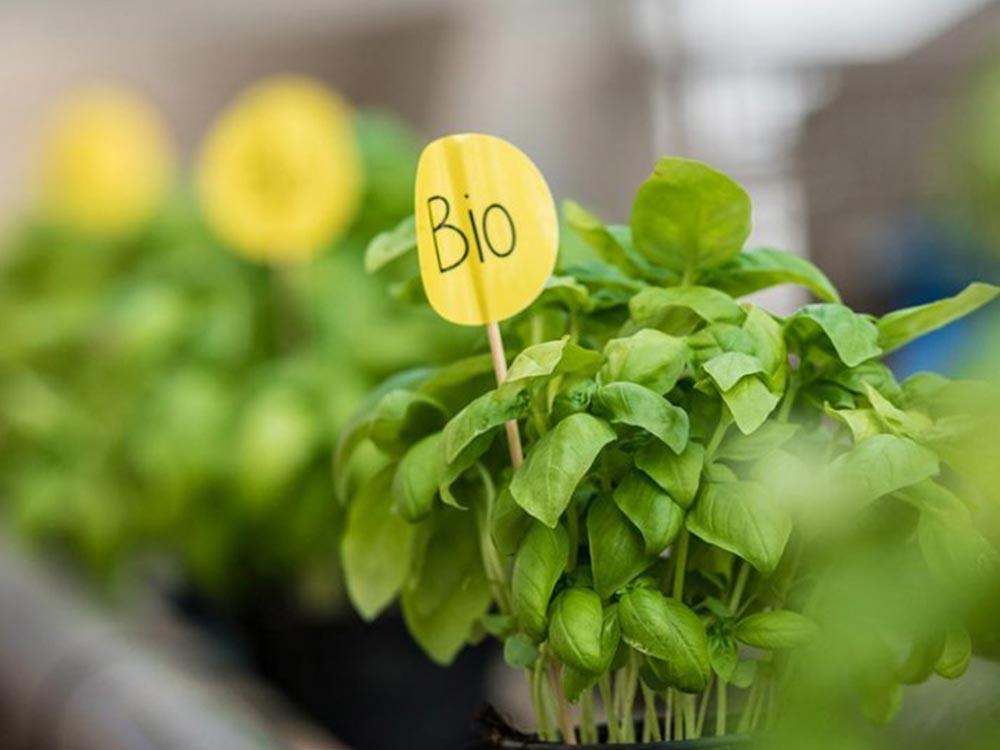 piante biologiche