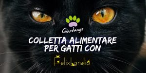 Colletta Alimentare per Gatti: Aiutiamo Felixlandia Tutti Assieme!