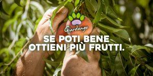 Incontro sulle potature degli alberi da frutto.